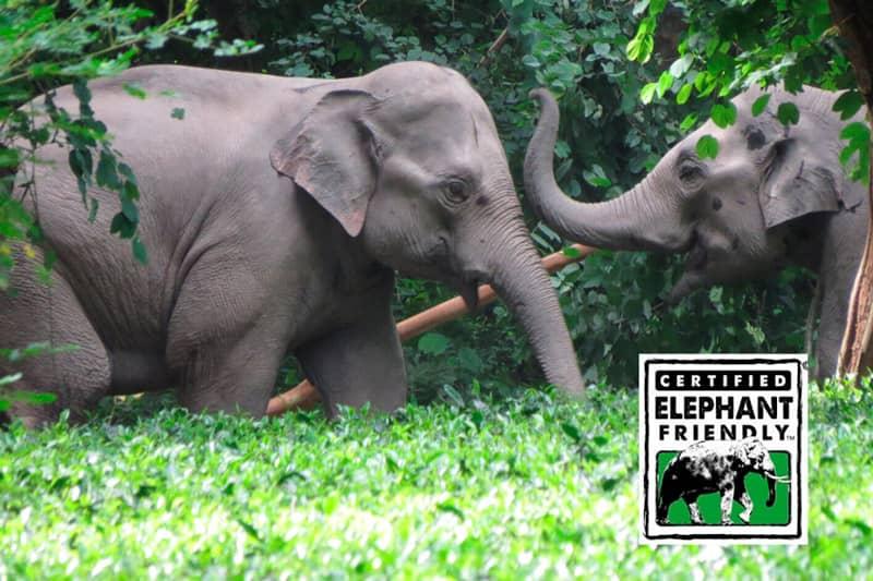 Certified Elephant Friendly