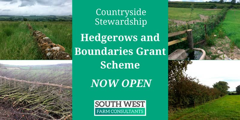 Countryside Stewardship Hedgerows and Boundaries Grants