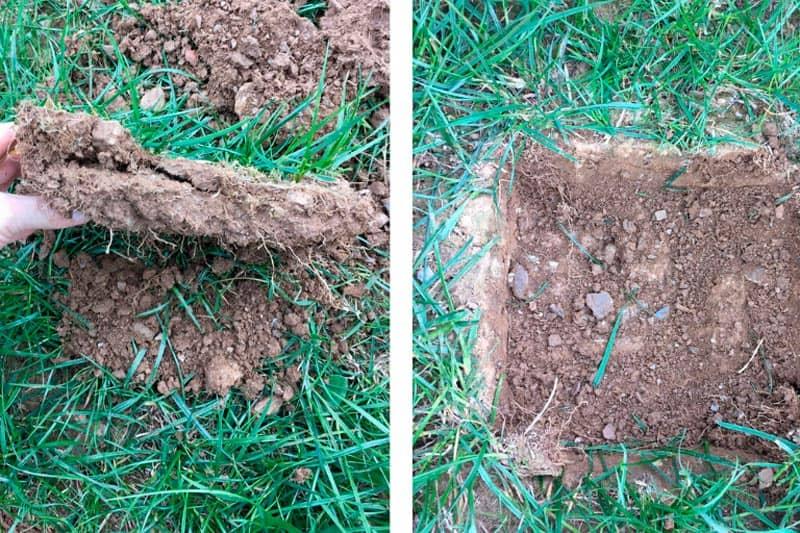 Leatherjackets soil pit