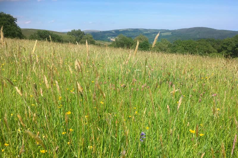 Moorland meadow at Priddons Farm, Dorset