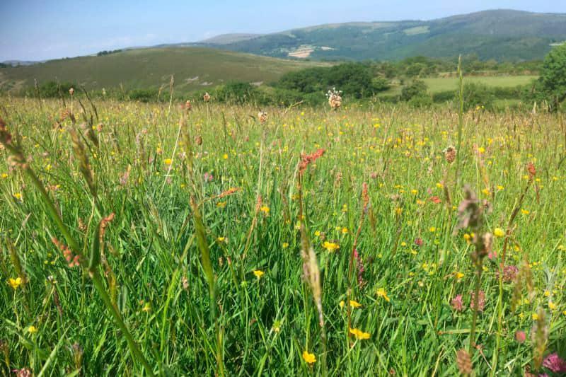 Moorland meadow