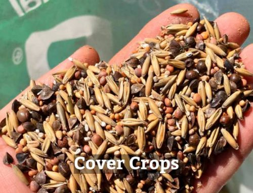 Cover Crops: How much effort (and money) should we put into them?