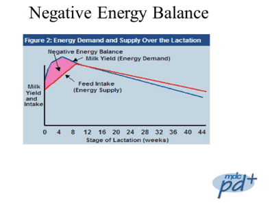 Figure 2 showing Energy Demand and Supply Over the Lactation