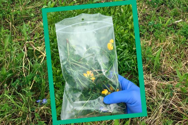Plant sap analysis