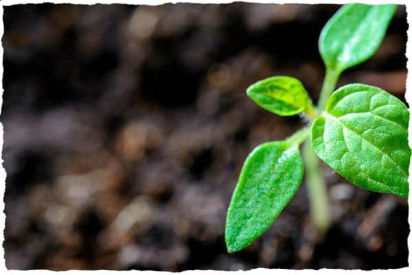 Soil nutrient management