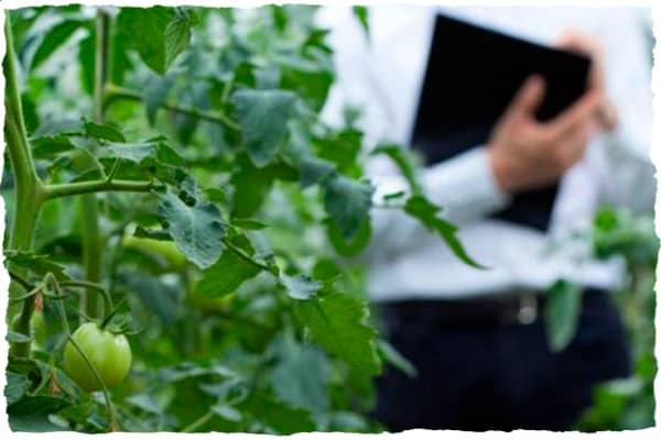 Organic inspection
