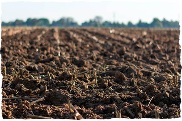 Soil in farmers field